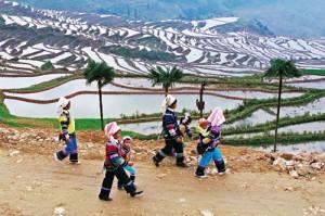 Hani Terraces Yuanyang
