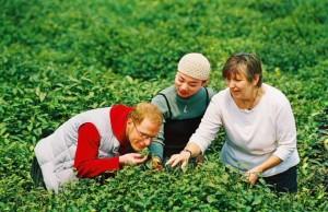 pick chinese tea