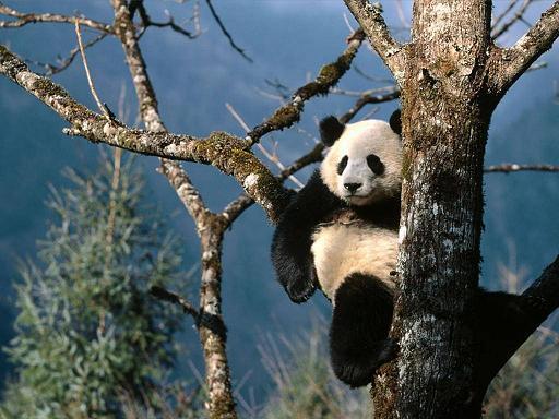 13 Days Beijing Xian Chengdu Ya`an Shangai Tour