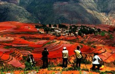 5 Days Tour of Dongchuan Red Land, Stone Forest and Dali