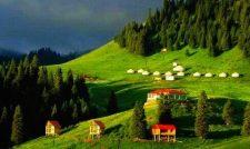 Nanshan Pasture