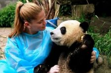 Giant panda hugging